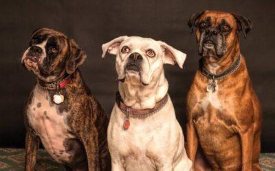 10 anledningar till varför din hund förtjänar 100% organisk CBD dagligen