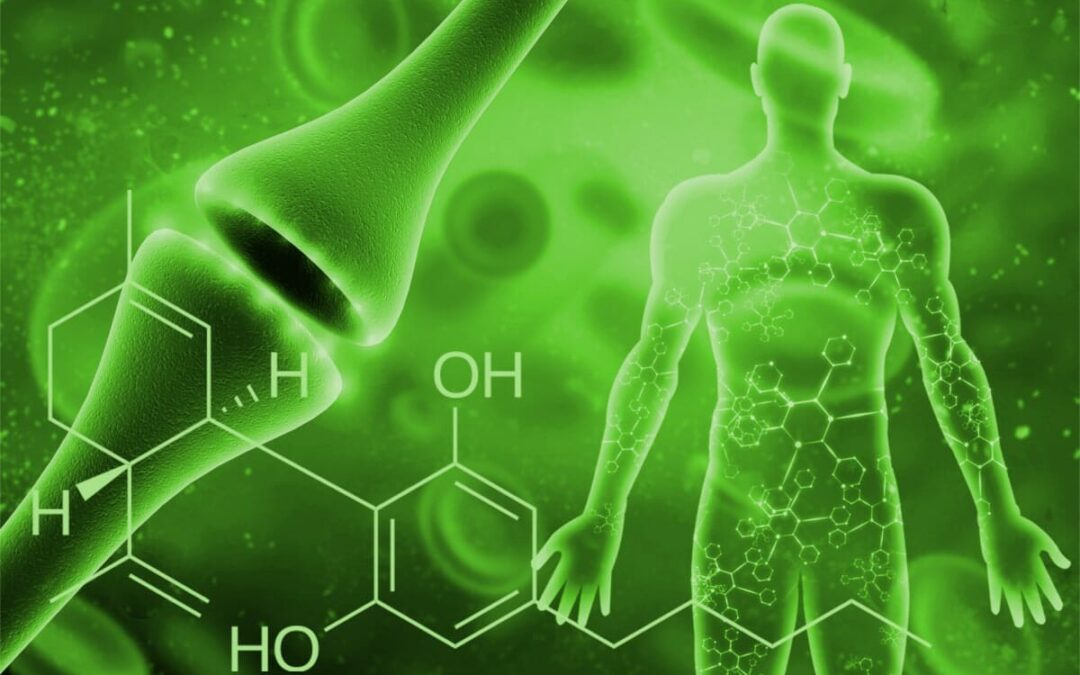 Hur CBD-olja påverkar vårt endocannabinoidsystem?