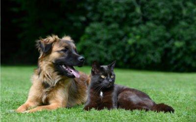 Topp 5 hälsofördelar av CBD för dina husdjur